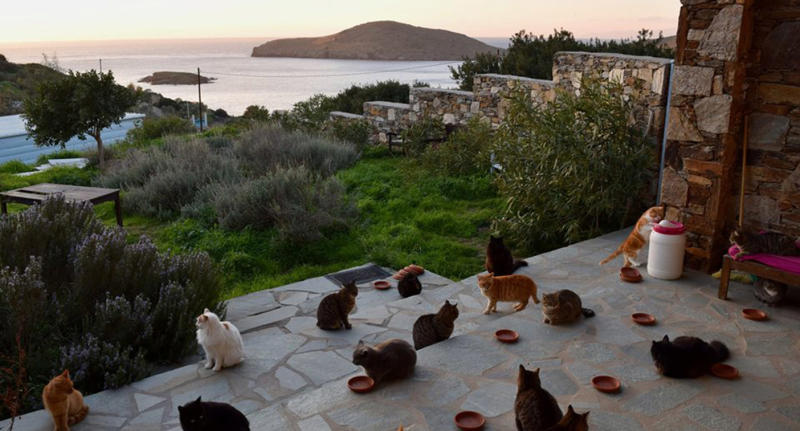 How you can work on cat island in Greece.