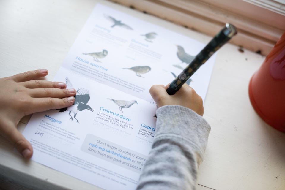 Bird identification form being filled out