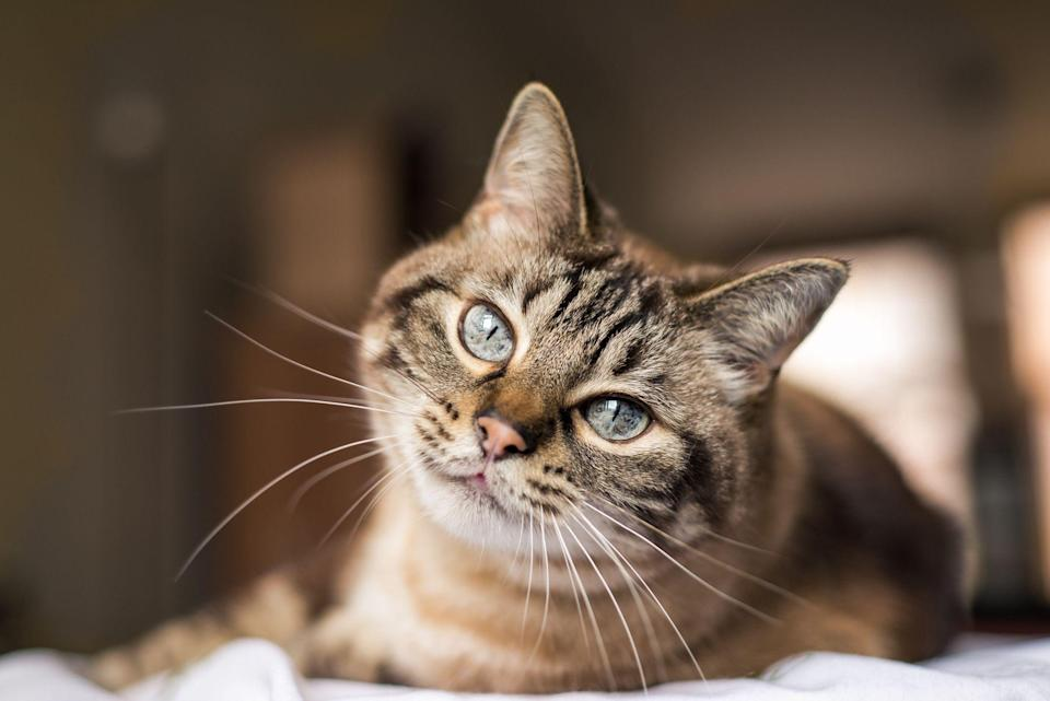 "<p>Let's face it: One of the <a href=""https://www.goodhousekeeping.com/life/pets/g21525625/why-cats-are-best-pets/"" rel=""nofollow noopener"" target=""_blank"" data-ylk=""slk:best parts of having a cat"" class=""link rapid-noclick-resp"">best parts of having a cat</a>, aside from the endless unconditional love they bring, is not having to take them outside to do their business. However, litter boxes (even <a href=""https://www.goodhousekeeping.com/home/cleaning/g31206600/best-self-cleaning-litter-box/"" rel=""nofollow noopener"" target=""_blank"" data-ylk=""slk:self-cleaning boxes"" class=""link rapid-noclick-resp"">self-cleaning boxes</a>) come with their own set of problems ranging from smell, cleanup, and well, finicky cats (we love you, too.) With that being said, not all litters are created equal, and choosing the wrong one is no hissing matter. </p><p>Our home care experts and engineers in the <a href=""https://www.goodhousekeeping.com/institute/about-the-institute/a19748212/good-housekeeping-institute-product-reviews/"" rel=""nofollow noopener"" target=""_blank"" data-ylk=""slk:Good Housekeeping Institute Pet Lab"" class=""link rapid-noclick-resp"">Good Housekeeping Institute Pet Lab</a> test everything needed to keep <a href=""https://www.goodhousekeeping.com/life/pets/"" rel=""nofollow noopener"" target=""_blank"" data-ylk=""slk:pets"" class=""link rapid-noclick-resp"">pets</a> and owners happy, from the <a href=""https://www.goodhousekeeping.com/life/pets/a19685529/best-dog-food-brands/"" rel=""nofollow noopener"" target=""_blank"" data-ylk=""slk:best food"" class=""link rapid-noclick-resp"">best food</a> to <a href=""https://www.goodhousekeeping.com/life/pets/g34620165/best-pet-cameras/"" rel=""nofollow noopener"" target=""_blank"" data-ylk=""slk:pet cameras"" class=""link rapid-noclick-resp"">pet cameras</a>. To find the best cat litter, we take into account things like absorbency, odor control, tracking, and clumping ability. Our favorite litters were easy to scoop, helped control odors, and didn't track little particles all over. Here are the best cat litters that the Good Housekeeping Institute recommends from top-performing brands and online reviewer favorites: </p><ul><li><strong>Best Overall Cat Litter:</strong> <a href=""https://www.amazon.com/dp/B0009X29WK?tag=syn-yahoo-20&ascsubtag=%5Bartid%7C10055.g.35038354%5Bsrc%7Cyahoo-us"" rel=""nofollow noopener"" target=""_blank"" data-ylk=""slk:Dr. Elsey's Premium Clumping Cat Litter"" class=""link rapid-noclick-resp"">Dr. Elsey's Premium Clumping Cat Litter</a> </li><li><strong>Best Value Cat Litter</strong>: <a href=""https://go.redirectingat.com?id=74968X1596630&url=https%3A%2F%2Fwww.walmart.com%2Fip%2FSpecial-Kitty-Scoopable-Tight-Clumping-Cat-Litter-Fresh-Scent-20-lb%2F42132300&sref=https%3A%2F%2Fwww.goodhousekeeping.com%2Flife%2Fpets%2Fg35038354%2Fbest-cat-litters%2F"" rel=""nofollow noopener"" target=""_blank"" data-ylk=""slk:Special Kitty Scoopable Cat Litter"" class=""link rapid-noclick-resp"">Special Kitty Scoopable Cat Litter</a></li><li><strong>Best Odor Control Cat Litter:</strong> <a href=""https://www.amazon.com/Purina-Tidy-Cats-Nature-Clumping/dp/B0091ULMHK?tag=syn-yahoo-20&ascsubtag=%5Bartid%7C10055.g.35038354%5Bsrc%7Cyahoo-us"" rel=""nofollow noopener"" target=""_blank"" data-ylk=""slk:Purina Tidy Cats Pure Nature Cat Litter"" class=""link rapid-noclick-resp"">Purina Tidy Cats Pure Nature Cat Litter</a> </li><li><strong>Best Clumping Cat Litter:</strong> <a href=""https://www.amazon.com/Worlds-Best-Cat-Litter-28-Pounds/dp/B007ZPX70I?tag=syn-yahoo-20&ascsubtag=%5Bartid%7C10055.g.35038354%5Bsrc%7Cyahoo-us"" rel=""nofollow noopener"" target=""_blank"" data-ylk=""slk:World's Best Cat Litter"" class=""link rapid-noclick-resp"">World's Best Cat Litter</a> </li><li><strong>Best Plant-Based Cat Litter:</strong> <a href=""https://www.amazon.com/okocat-Unscented-Featherwieght-Clumping-Litter/dp/B0851MVRNQ?tag=syn-yahoo-20&ascsubtag=%5Bartid%7C10055.g.35038354%5Bsrc%7Cyahoo-us"" rel=""nofollow noopener"" target=""_blank"" data-ylk=""slk:ökocat Natural Wood Clumping Cat Litter"" class=""link rapid-noclick-resp"">ökocat Natural Wood Clumping Cat Litter</a> </li><li><strong>Best Flushable Cat Litter:</strong> <a href=""https://www.amazon.com/sWheat-Scoop-Premium-Cat-Litter/dp/B01M1GBZFH?tag=syn-yahoo-20&ascsubtag=%5Bartid%7C10055.g.35038354%5Bsrc%7Cyahoo-us"" rel=""nofollow noopener"" target=""_blank"" data-ylk=""slk:sWheat Scoop Natural Clumping Wheat Cat Litter"" class=""link rapid-noclick-resp"">sWheat Scoop Natural Clumping Wheat Cat Litter</a> </li><li><strong>Best Cat Litter for Multiple Cats:</strong> <a href=""https://www.amazon.com/dp/B07NPPNVK8?tag=syn-yahoo-20&ascsubtag=%5Bartid%7C10055.g.35038354%5Bsrc%7Cyahoo-us"" rel=""nofollow noopener"" target=""_blank"" data-ylk=""slk:Arm & Hammer Cloud Control Cat Litter"" class=""link rapid-noclick-resp"">Arm & Hammer Cloud Control Cat Litter</a></li><li><strong>Best Crystal Cat Litter: </strong><a href=""https://go.redirectingat.com?id=74968X1596630&url=https%3A%2F%2Fwww.chewy.com%2Ffresh-steps-fresh-scented-non%2Fdp%2F103428&sref=https%3A%2F%2Fwww.goodhousekeeping.com%2Flife%2Fpets%2Fg35038354%2Fbest-cat-litters%2F"" rel=""nofollow noopener"" target=""_blank"" data-ylk=""slk:Fresh Step Non-Clumping Crystal Cat Litter"" class=""link rapid-noclick-resp"">Fresh Step Non-Clumping Crystal Cat Litter</a></li></ul>"