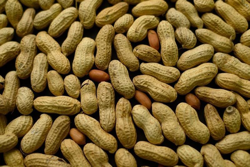 Study suggests babies who eat peanut less likely to develop allergy