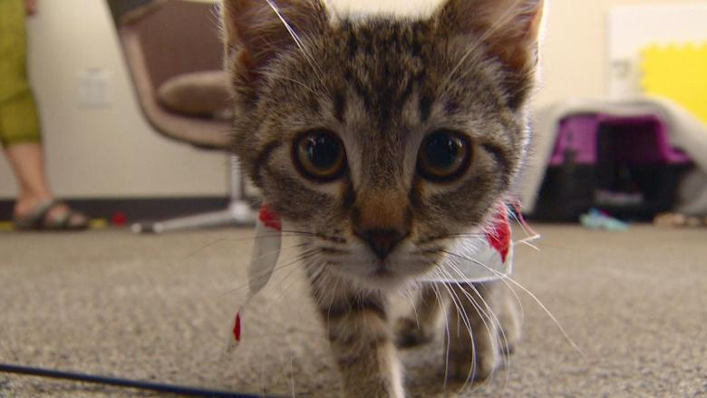 Feline fans have claw-some time at Edmonton cat festival