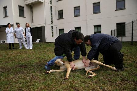 Andres Garcia (L), 29, and Inaki Gorriz, 24, pet Atila, a trained therapeutic greyhound used to treat patients with mental health issues and learning difficulties, as their nurses and therapists look on at Benito Menni health facility in Elizondo, northern Spain, February 13, 2017.  REUTERS/Susana Vera