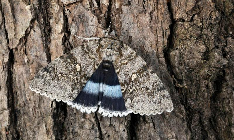 Country diary: art imitates nature to reveal the delicate beauty of moths