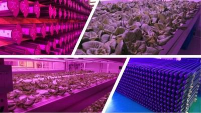 Future Farm Technologies Inc.'s, LED Canada division has made significant progress in the past quarter