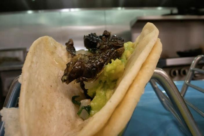 A taco cicadas is seen at Cocina on Market restaurant, as Brood X or Brood 10 cicadas have begun emerging from the earth after 17 years, in Leesburg, Virginia U.S.