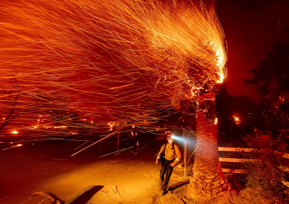 A firefighter passes a burning tree while battling the Bond Fire in Orange County, California last month. More fires have erupted and red flag warnings are in place during what is typically the state's rainy season (AP)