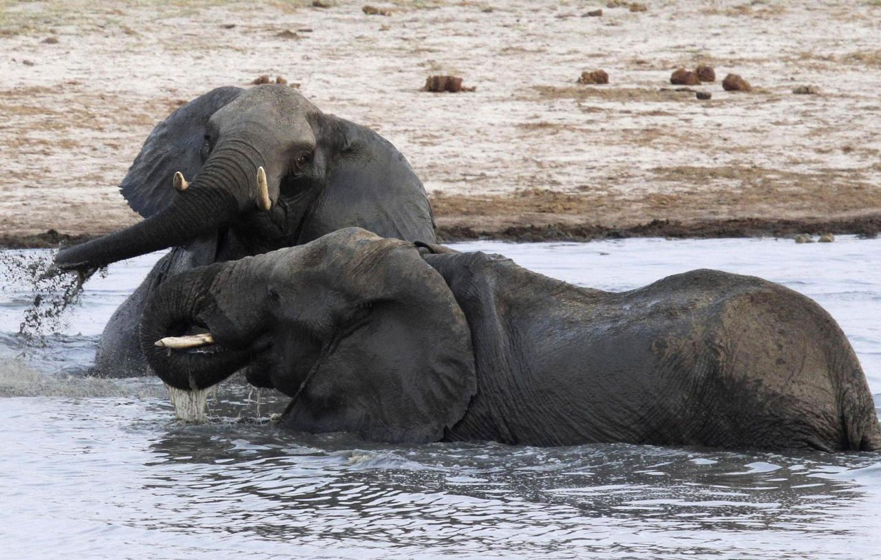 A herd of elephants gather at a watering hole in Hwange National Park
