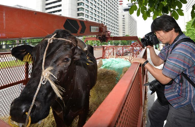 Japanese farmers bring a cow to the front of the agriculture ministry in Tokyo, on June 20, 2014
