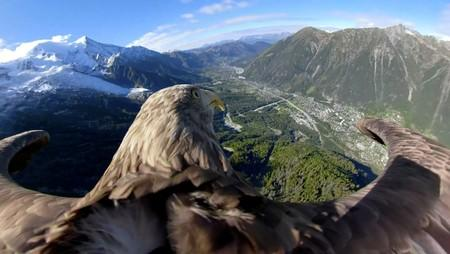 Victor a nine year old white-tailed eagle equipped with a 360 camera flies over glaciers and mountains in Chamonix