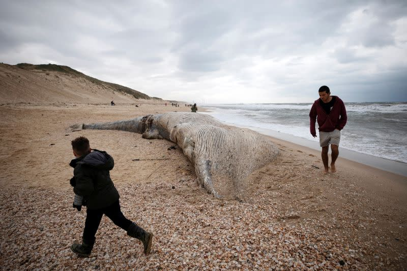 People walk near the body of a dead whale after it washed ashore from the Mediterranean near Nitzanim, Israel