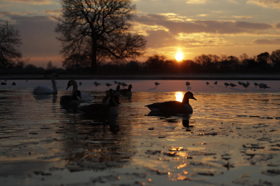 Sunrise in Bushy Park, south west London, England. Photo: Matt Dunham/AP