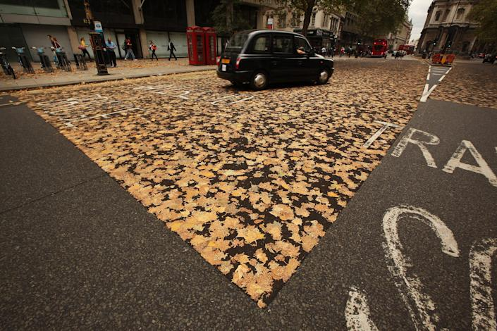 Leaves are stuck to the road surface on October 5, 2011 in London, England. A combination of late Summer high temperatures and an early fall of leaves onto a sticky non-slip section of road tarmac has created a leafy collage. (Photo by Peter Macdiarmid/Getty Images)