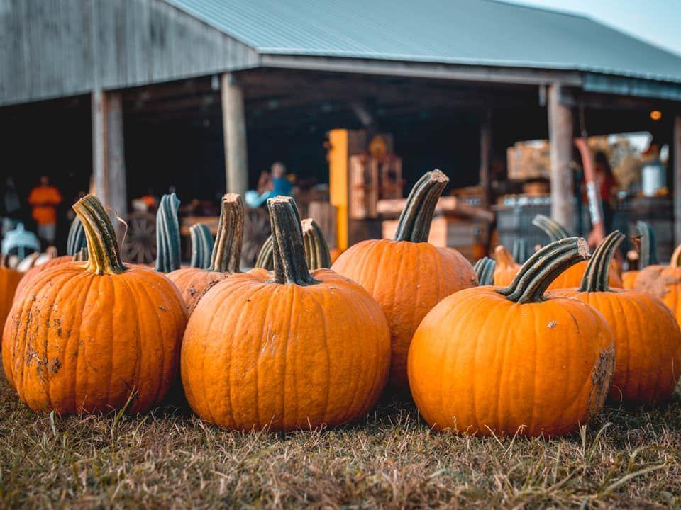 """<p><strong>Springfield, Tennessee (Sept 25-Oct 31)</strong></p><p>Get outside at <a href=""""https://www.honeysucklehillfarm.com/plan-your-visit/"""" rel=""""nofollow noopener"""" target=""""_blank"""" data-ylk=""""slk:Honeysuckle Hill Farm"""" class=""""link rapid-noclick-resp""""><strong>Honeysuckle Hill Farm</strong></a> for a plethora of fun activities — including a zip line, bonfire pits, and even a """"Cornado Swing"""" ride. Just 30 minutes from Nashville, you won't want to miss this fall festival! Be sure to <a href=""""https://www.honeysucklehillfarm.com/fall-pricing"""" rel=""""nofollow noopener"""" target=""""_blank"""" data-ylk=""""slk:check here"""" class=""""link rapid-noclick-resp"""">check here</a> for pricing for the 2021 season. </p><p><strong>RELATED: </strong><a href=""""https://www.goodhousekeeping.com/life/travel/g28185739/new-england-fall-foliage-places/"""" rel=""""nofollow noopener"""" target=""""_blank"""" data-ylk=""""slk:21 Breathtaking Places to Check Out Fall Foliage in New England"""" class=""""link rapid-noclick-resp"""">21 Breathtaking Places to Check Out Fall Foliage in New England</a></p>"""