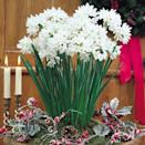 <p>These <span>Paperwhite Narcissus Inbal Bulbs</span> ($25) produce flowers so cheery, you can't help but smile when looking at them.</p>