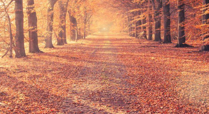 Autumnal Equinox 2019 When Is The First Day Of Fall