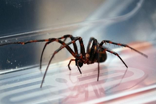 A cave spider (National Trust/PA)