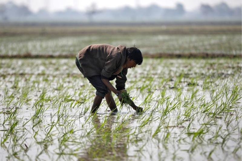 Farmers Can Sell Produce Outside States as Cabinet Approves Amendments to Essential Commodities Act