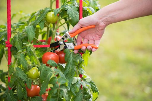 Is Gardening Good for the Brain? Florida Researchers Think Yes