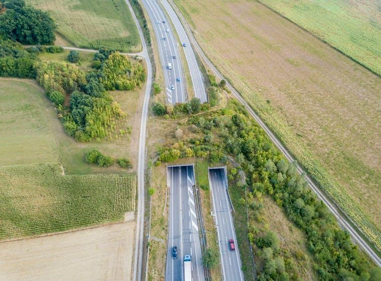 An aerial view of a motorway overpass covered in shrubs and trees.