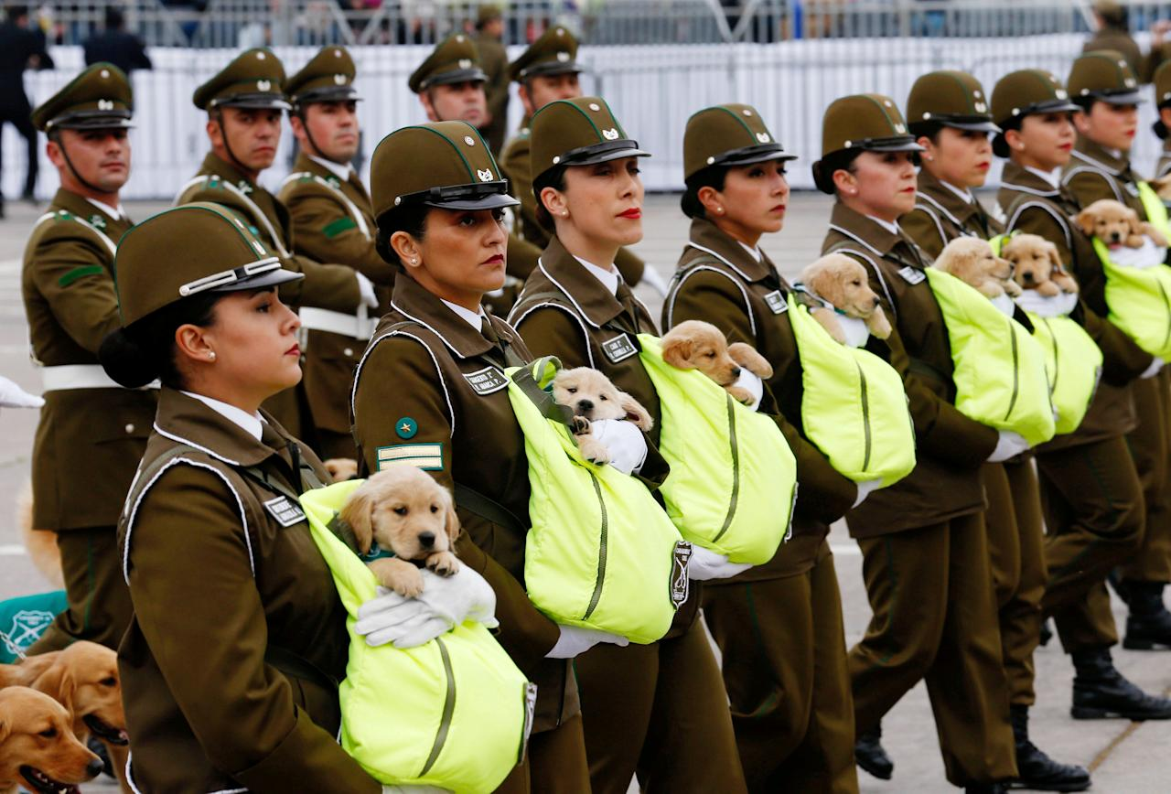 Chilean police officers march with the puppies of future police dogs during the annual military parade at the Bernardo O'Higgins park in Santiago, Chile, September 19, 2018. REUTERS/Rodrigo Garrido      TPX IMAGES OF THE DAY