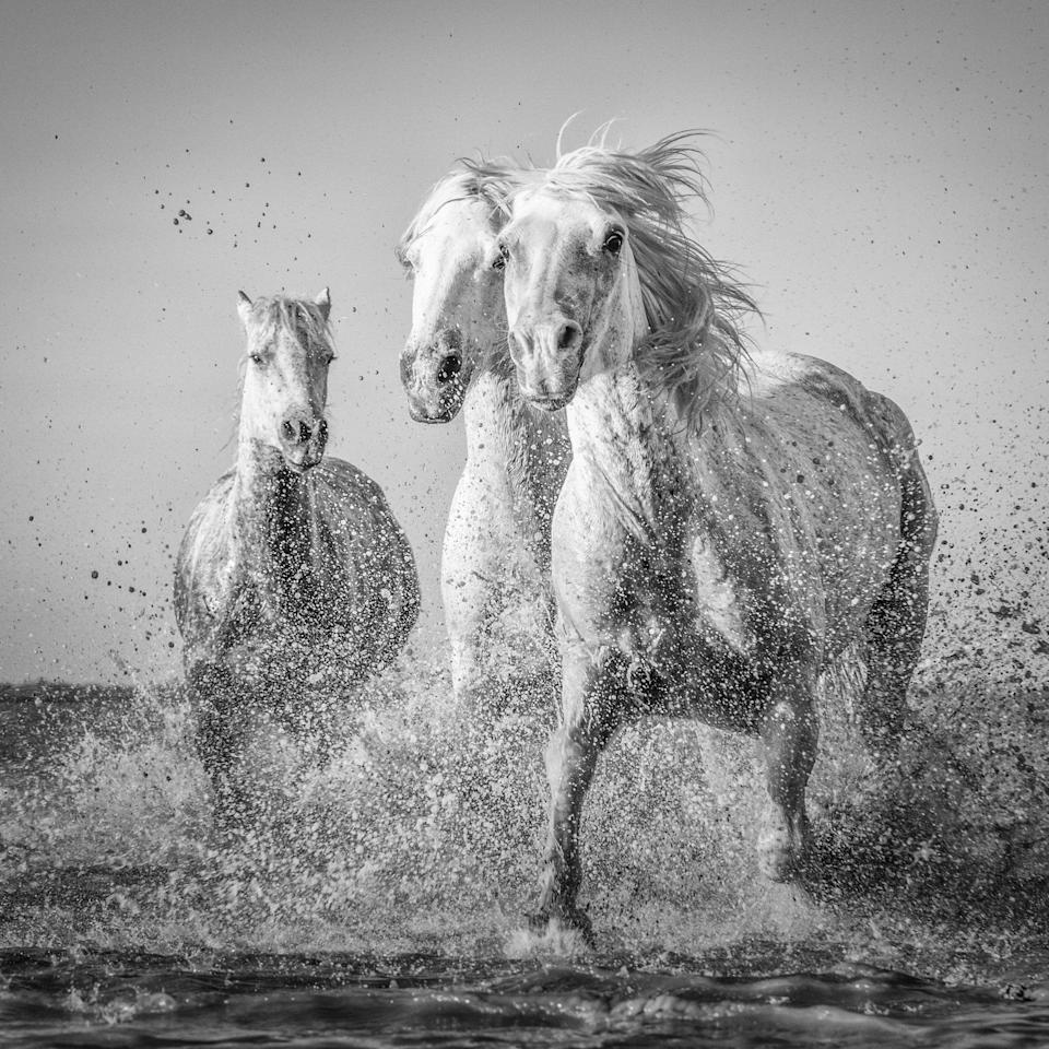 "<p>Wild horses in the Camargue – Tracey Lund, a 44-year-old customer experience engineer from Hull, Yorkshire, said: ""As they ran towards us, I wanted to get down low to get a different aspect of them approaching us. I love the expression of the nearest horse as it realised I was laying on the sand. It was an amazing experience to watch these majestic horses."" Source: Tracy Lund / SWNS </p>"