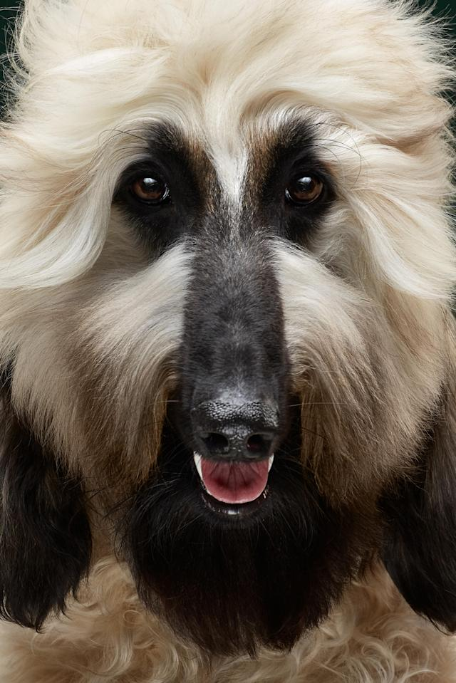 <p>To date, the duo has made portraits of around 50 different breeds of pooches, drawing much critical acclaim. (Photo: Alexander Khokhlov-Veronica Ershova/Caters News) </p>