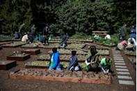 <p>It was former First Lady Michelle Obama's idea to have a garden planted for varying uses, including educating children on the importance of healthy eating...</p>