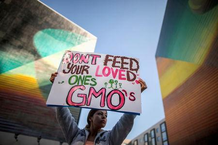 """FILE PHOTO: A woman holds a sign during one of many worldwide """"March Against Monsanto"""" protests against Genetically Modified Organisms (GMOs) and agro-chemicals, in Los Angeles, California October 12, 2013. REUTERS/Lucy Nicholson/File Photo"""