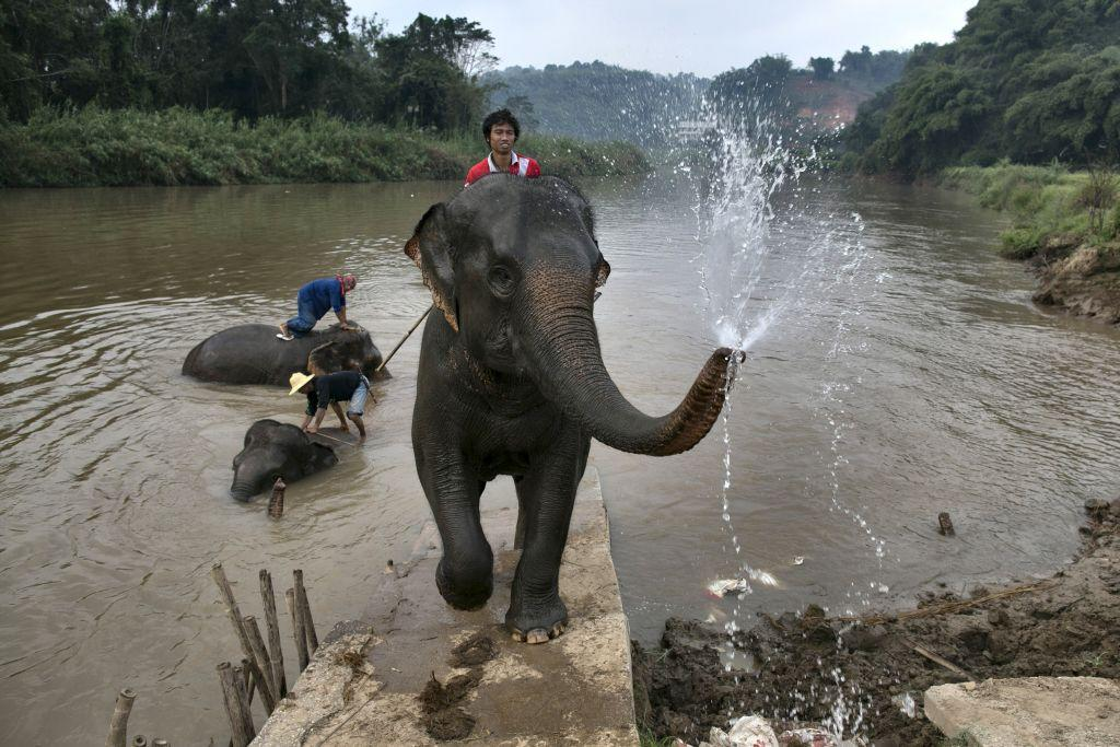 A mahout rides his elephant after bathing at an elephant camp at the Anantara Golden Triangle resort in Golden Triangle, northern Thailand.