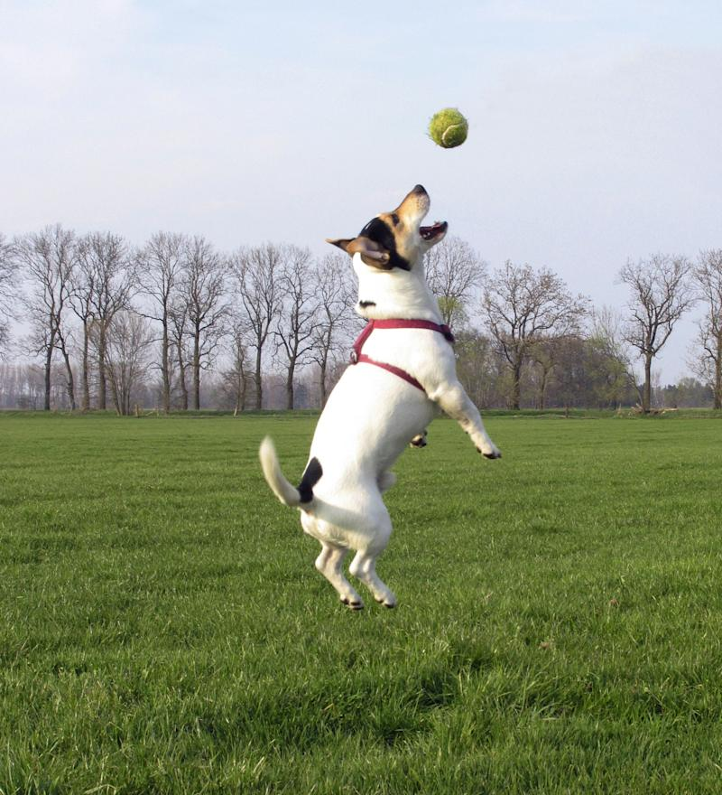 University of Lincolnshire scientists found that dogs recognise objects by texture, not shape (Image: Rex)