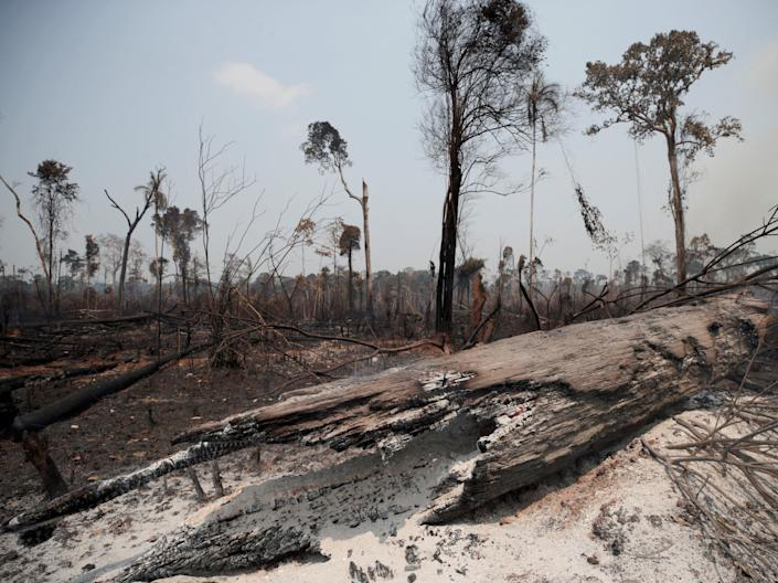 Charred tree trunks are seen on a tract of Amazon jungle burned by loggers and farmers in Porto Velho, Brazil, August 2019Ueslei Marcelino/Reuters