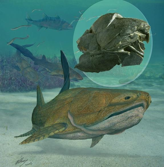 How Cheeky: Fossil Fish Is Oldest Creature With a Face