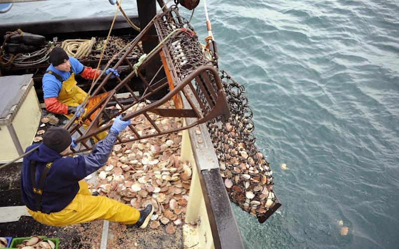 An investment fund is pumping $4 million into two companies focused on smart farming of seafood