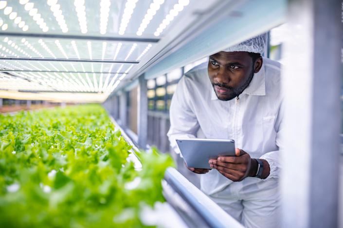 African agriculture researcher observing the development of plant crops in a vertical farming facility.