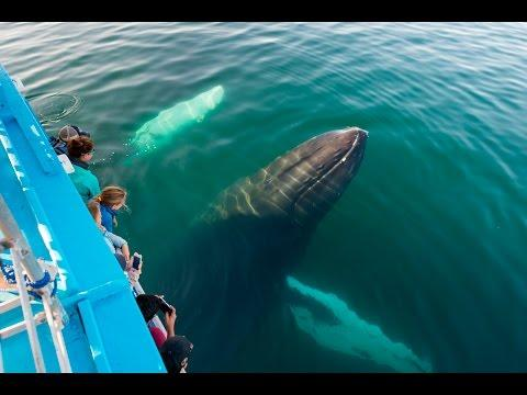 """<p>For their fourth wedding anniversary, Gary decided to surprise his wife with a Brier Island whale watching tour. Being an avid photographer, he brought along his camera and drone to capture the days events. To his surprise and the surprise of all those on board the boat, a group of humpback whales approached the tour.</p><p>For more information and images from the tour, please visit <a href=""""http://www.brintonphotography.ca/blog/2016/9/7/covering-a-whale-watch-tour-by-drone-video"""" target=""""_blank"""">Gary's blog</a>. Credit: YouTube/Brinton Photography</p>"""