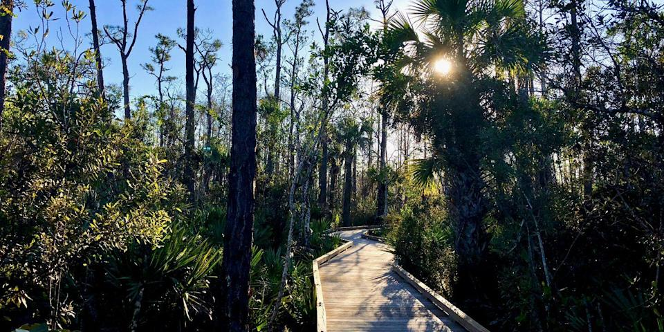 """<p><a href=""""https://www.tripadvisor.com/ShowUserReviews-g43981-d7289715-r572918005-Natchez_Trace_Multi_Use_Trail-Ridgeland_Mississippi.html"""" rel=""""nofollow noopener"""" target=""""_blank"""" data-ylk=""""slk:Cypress Swamp"""" class=""""link rapid-noclick-resp"""">Cypress Swamp</a>, just north of Jackson, can be found along Mississippi's Natchez Trace Parkway, a 444-mile scenic route from Natchez to <a href=""""https://www.bestproducts.com/fun-things-to-do/g2479/best-things-to-do-in-nashville/"""" rel=""""nofollow noopener"""" target=""""_blank"""" data-ylk=""""slk:Nashville"""" class=""""link rapid-noclick-resp"""">Nashville</a>. Walk beside towering tupelo and bald cypress trees while on a raised wooden boardwalk that goes right through this beautiful swamp. Keep an eye out for wildlife species, including frogs, snakes, and even alligators.</p>"""