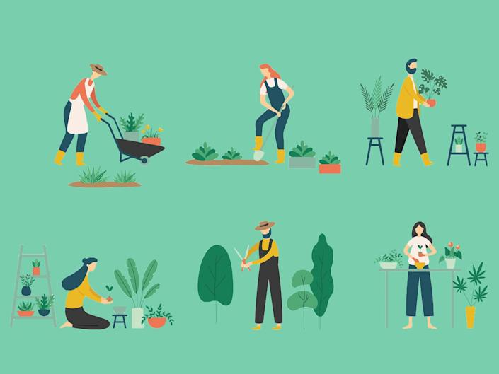 Gardening can be a rewarding hobby, so if you're new to it, these are the tools, seeds, bulbs and books you need: iStock