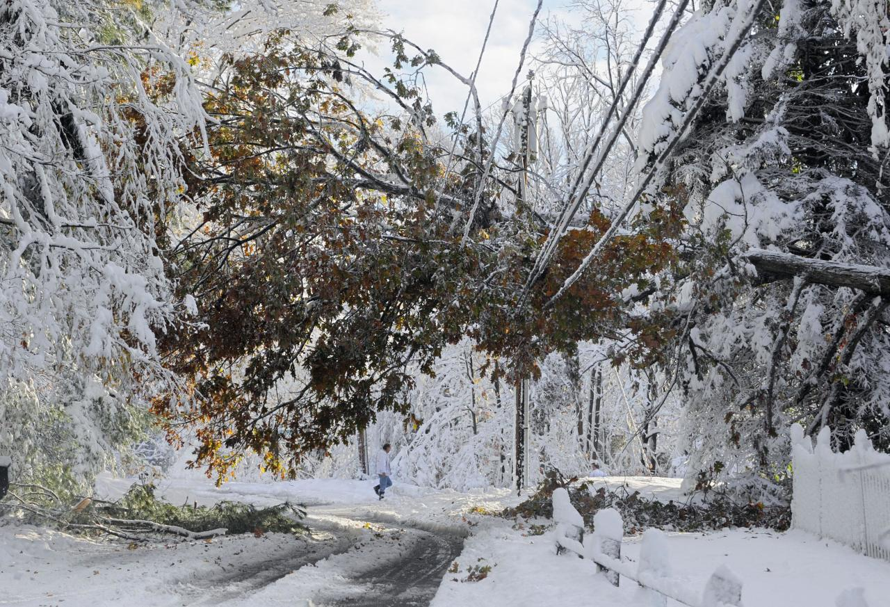 A man walks near a tree down on a power line a day after a snow storm in Glastonbury, Conn., Sunday, Oct. 30, 2011.  (AP Photo/Jessica Hill)