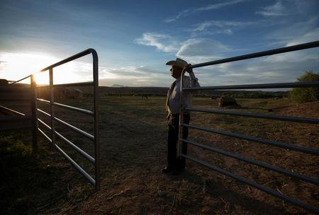 FILE PHOTO: Rancher Cliven Bundy looks out over his 160 acre ranch in Bunkerville, Nevada, U.S., May 3, 2014.  REUTERS/Mike Blake/File Photo