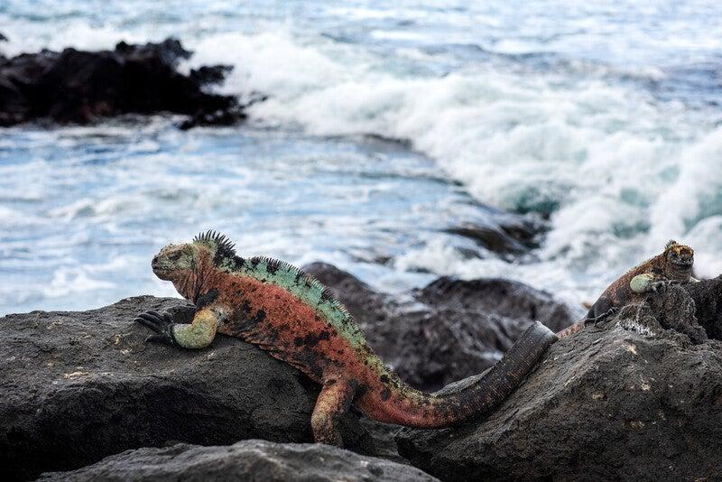 <p>Rewilding the Galapagos will involve reintroducing extinct species and re-establishing wildlife populations</p> (Andrew S Wright)