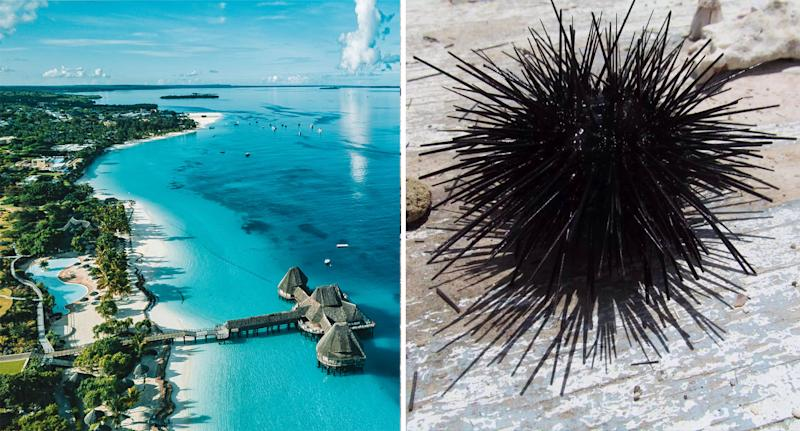 An aerial photo of a Zanzibar resort (left) and a black sea urchin on a wooden table (right).