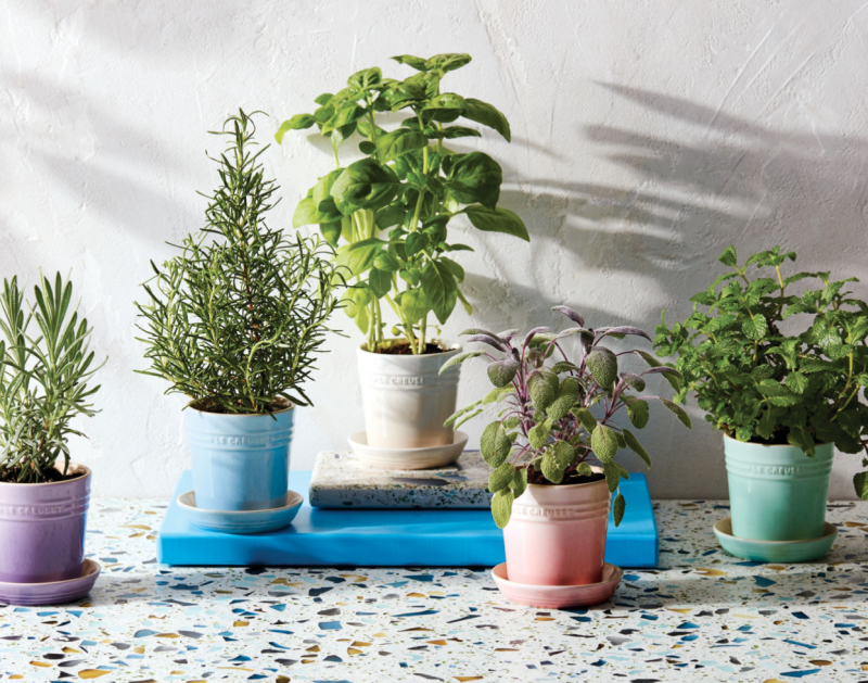 Your basil will thank you for such a happy home. (Photo: Le Creuset)