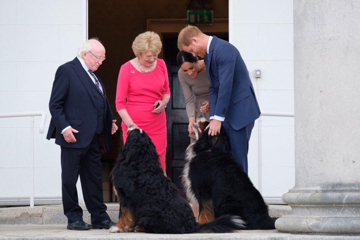 <p>Meghan and Harry met the President of Ireland, Michael Higgins, Mrs Higgins, and their two massive dogs, Bród and Síoda.</p>