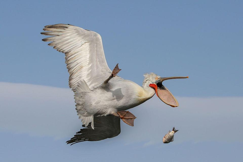 <p>If you've ever made food and then immediately dropped it on the floor, you know how this bird feels. </p>