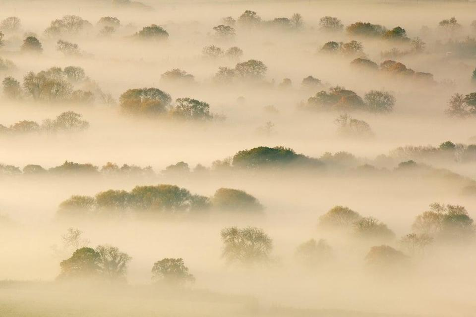 Trees shrouded by mist on the Somerset Levels (Getty)