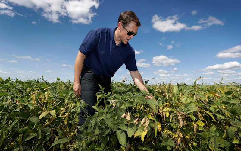 Grant Kimberley checks soybean plans on his farm near Maxwell, Iowa - AP