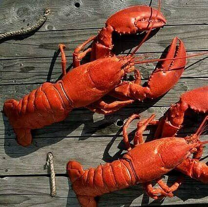 """<strong>How It Works:</strong><a href=""""https://fave.co/2z0MyYk"""" target=""""_blank"""" rel=""""noopener noreferrer"""">Lobster Anywhere </a>specializes in overnight live Maine lobster and frozen lobster tail delivery.It's available year-round from a sustainable fishery and locally caught by independent lobstermen.<br /><strong>Offerings:</strong> Find whole lobsters, lobster tails and lobster meat, as well as shrimp and scallops.<br /><strong>Pricing: </strong>Buy a 1.5-ounce live <a href=""""https://fave.co/3duDHgp"""" target=""""_blank"""" rel=""""noopener noreferrer"""">lobster for $30</a> or a 1-pound bag of <a href=""""https://fave.co/36V9BAd"""" target=""""_blank"""" rel=""""noopener noreferrer"""">shrimp for $40</a>.<br /><strong>How To Try It</strong>: Visit<a href=""""https://fave.co/2z0MyYk"""" target=""""_blank"""" rel=""""noopener noreferrer"""">Lobster Anywhere</a>."""