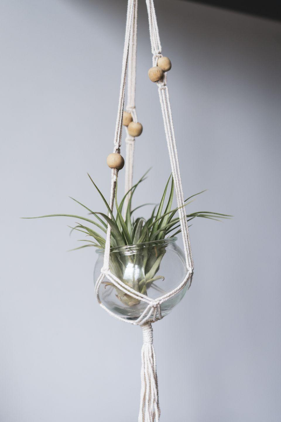 """<p>Air plants are a type of epiphyte, which means they can grow without soil. That means, it's the closest thing to a no-care plant! It's often sold in a glass globe, so hang it in a visible spot where you can see its delicate beauty. Give it bright light, and water by misting occasionally.</p><p><a class=""""link rapid-noclick-resp"""" href=""""https://www.amazon.com/Xerographica-Air-Plant-Plants-Pets/dp/B07QVSZJLT/?tag=syn-yahoo-20&ascsubtag=%5Bartid%7C10055.g.32440507%5Bsrc%7Cyahoo-us"""" rel=""""nofollow noopener"""" target=""""_blank"""" data-ylk=""""slk:SHOP TILLANDSIA"""">SHOP TILLANDSIA</a></p>"""