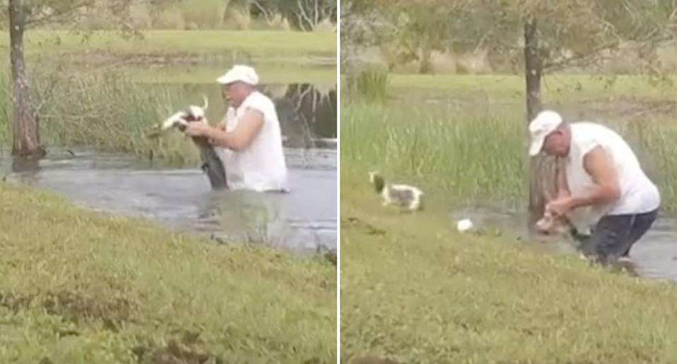 A man releases a small dog from the jaws of an alligator.