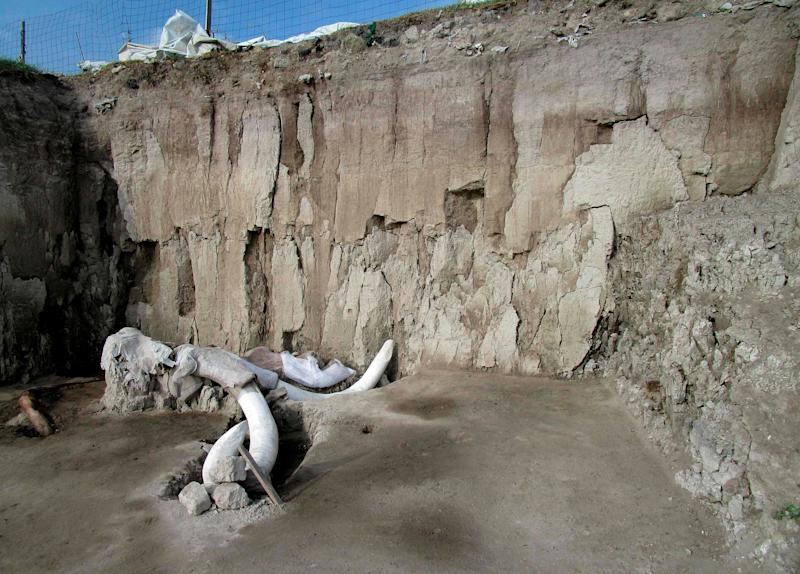 Researchers didn't think humans attacked woolly mammoths – until they uncovered a trap in Mexico